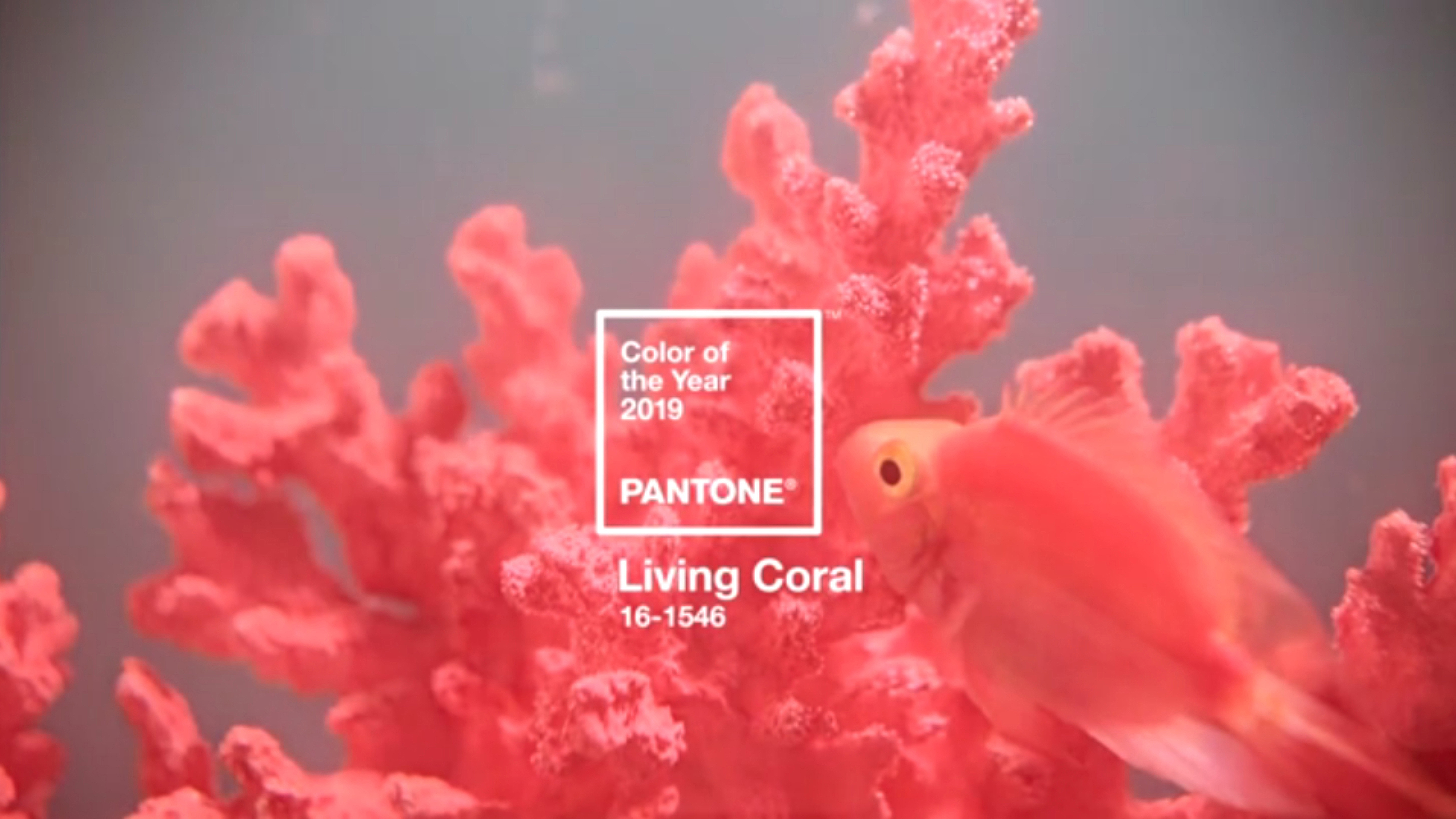 In Living Coral? Pantone tips pink-tinted hue for 2019 as ...
