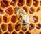 Neonicotinoids: devastating to bees and honey?