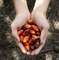 Palm oil – navigating through sustainability