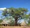 Baobab resurgence? Things are